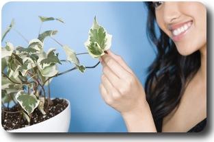 Фен шуй и растения